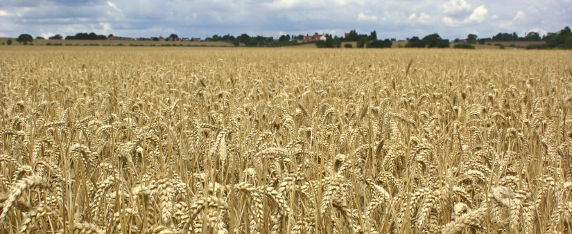 The New Word on Wheat Starch