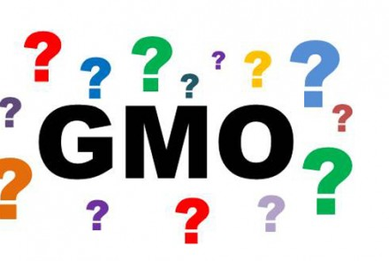 Breaking Down the GMO Debate