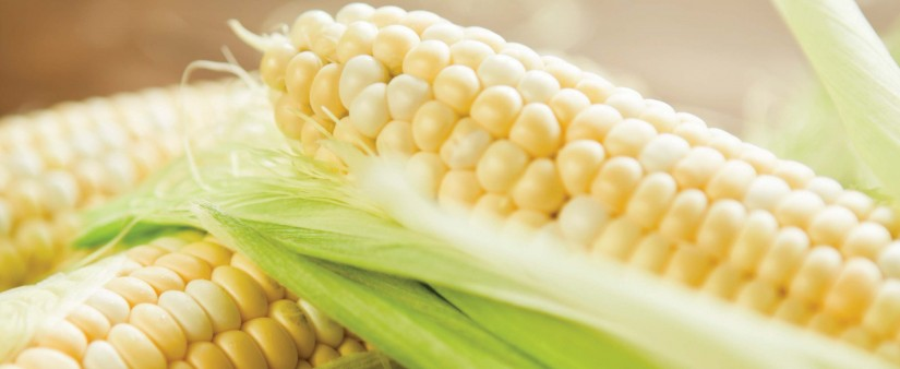 Gluten Free and Corn Free: How to Manage Two Tricky Dietary Restrictions at Once