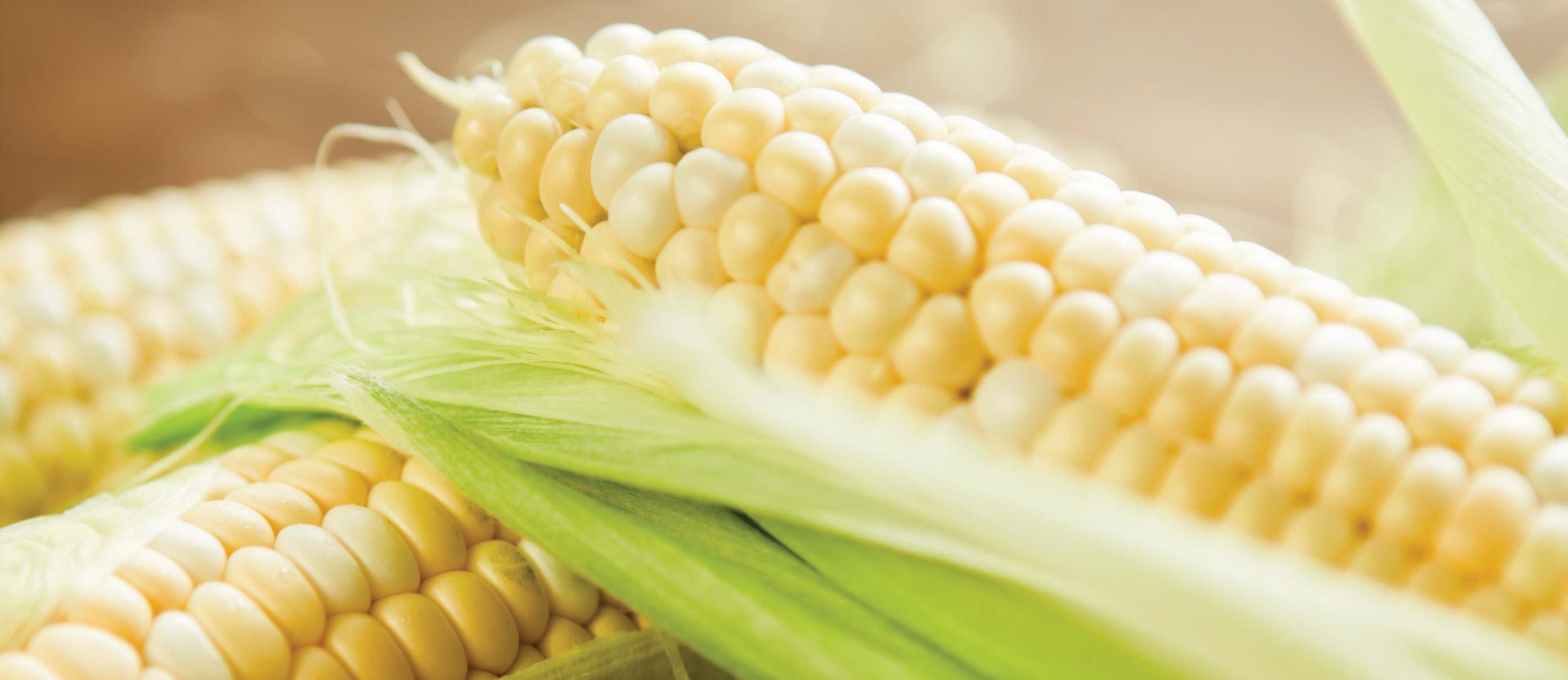 wheat corn free diet