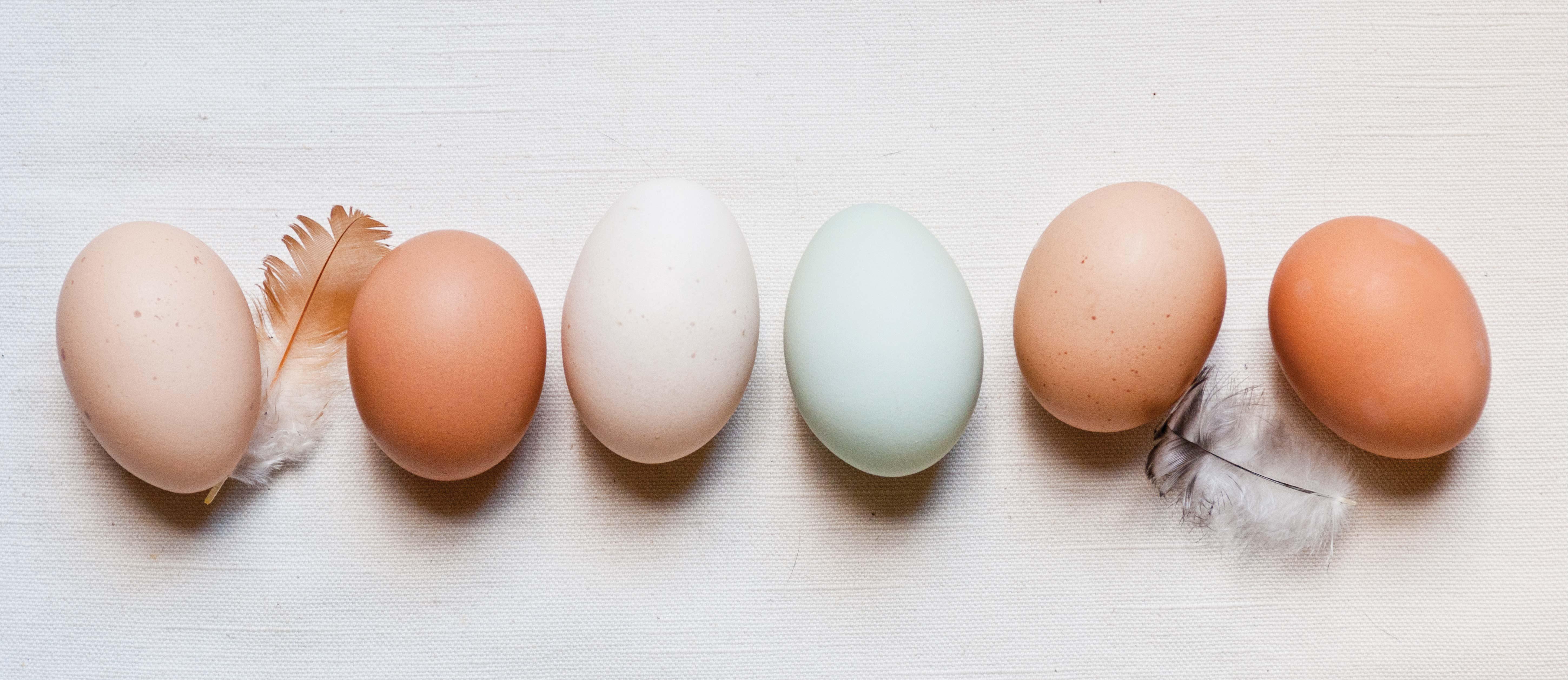 eggs good for gluten free diet
