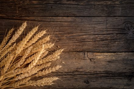 A Wheat You Can Eat? Gene Editing Could Lead to Wheat Safe for Celiacs