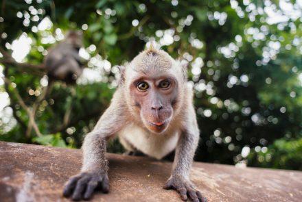 Study Sessions: Drug Heals Celiac Monkeys, Undiagnosed CD Impacts Pregnancy