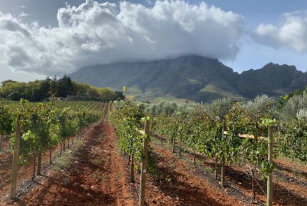 Gluten-Free Travel: Savor the View, World-Class Wine in Stunning Cape Town