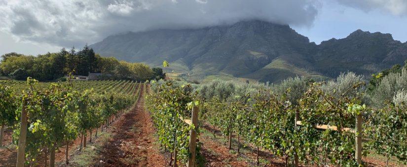 Gluten-Free Travel: Savor the View, World-Class Wine in Stunning Cape Town