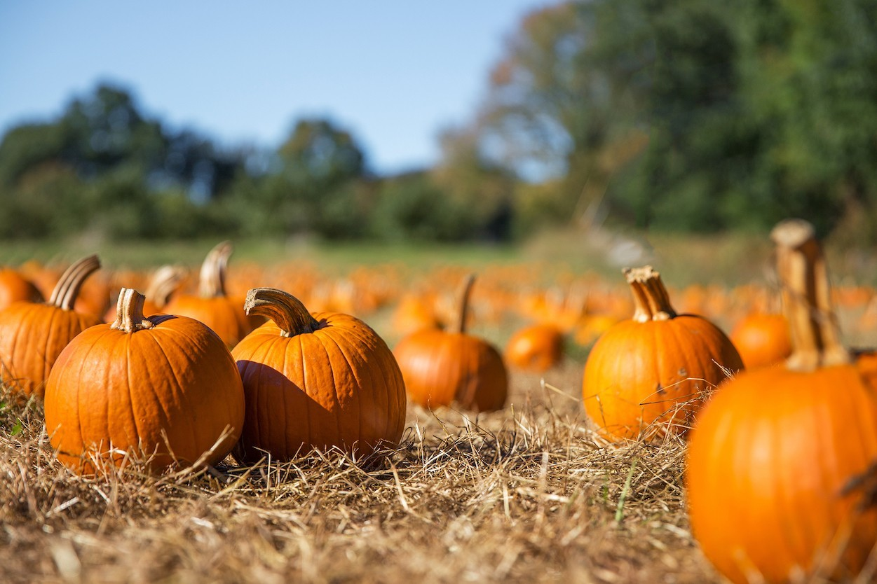 6 New Pumpkin-Inspired Foods Hitting Stores This Fall